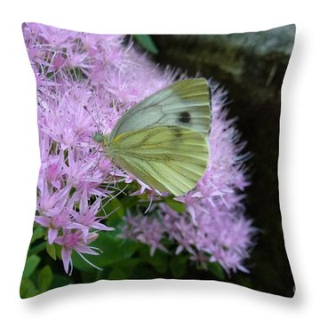 Butterfly On Mauve Flowers Throw Pillow