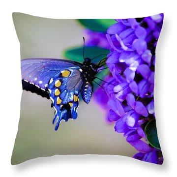 Butterfly On Mountain Laurel Throw Pillow by Debbie Karnes