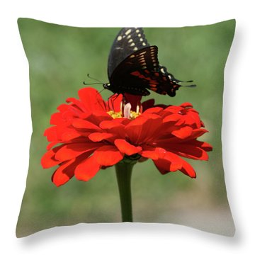 Butterfly On Red Zinnia Throw Pillow