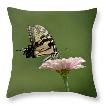 Butterfly On Zinnia Throw Pillow