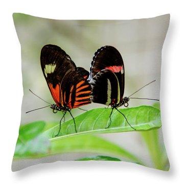 Butterfly Pair Throw Pillow