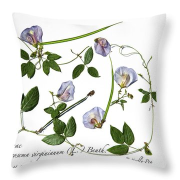 Butterfly Pea Throw Pillow