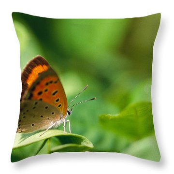 Butterfly Perching On A Leaf Throw Pillow