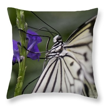 Butterfly Splendor Throw Pillow