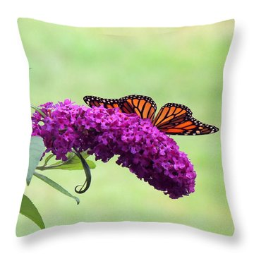 Butterfly Wings Throw Pillow by Teresa Schomig