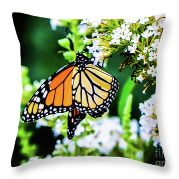 Butterfly2 Throw Pillow