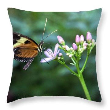 Butterfly4 Throw Pillow