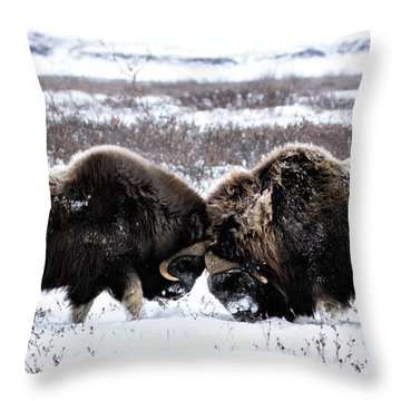 Butting Heads Throw Pillow