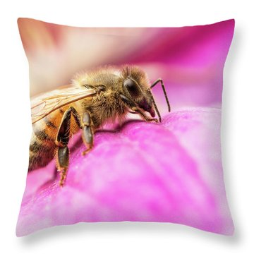 Buzz Throw Pillow
