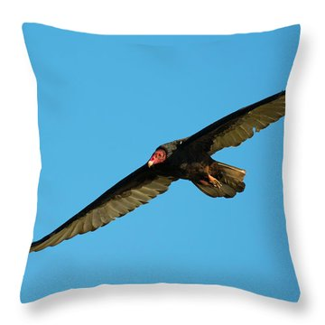 Buzzard Circling Throw Pillow