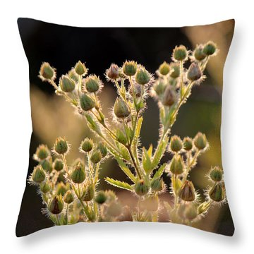 By Incident Light Throw Pillow