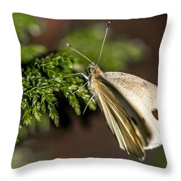 Cabbage Butterfly On Evergreen Bush Throw Pillow