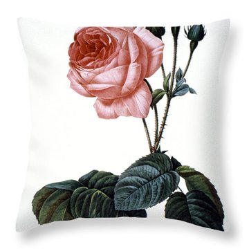 Cabbage Rose Throw Pillow by Granger