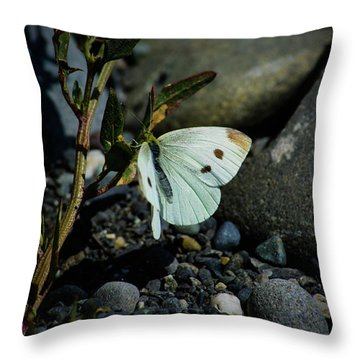 Throw Pillow featuring the photograph Cabbage White Butterfly by Tikvah's Hope