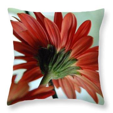 Cabrera Daisy Throw Pillow by John Schneider