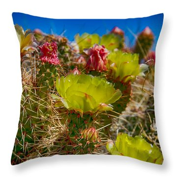 Cactus At The End Of The Road Throw Pillow