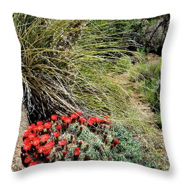 Crimson Barrel Cactus Throw Pillow