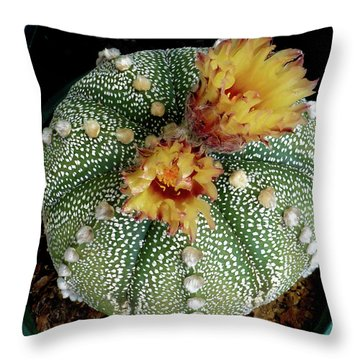 Cactus Flower 10 Throw Pillow
