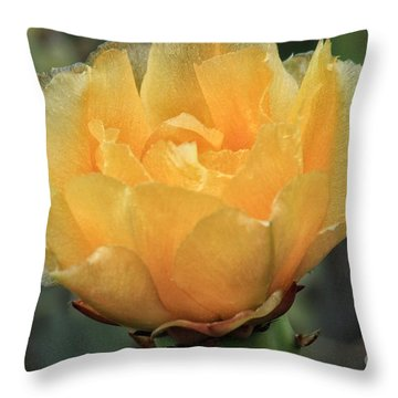 Cactus Flower 2016   Throw Pillow