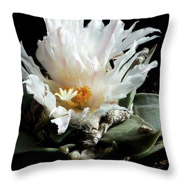 Cactus Flower 8 Throw Pillow