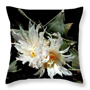 Cactus Flower 9 2 Throw Pillow