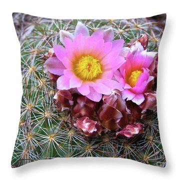 Throw Pillow featuring the painting Cactus Flower  by Alan Johnson
