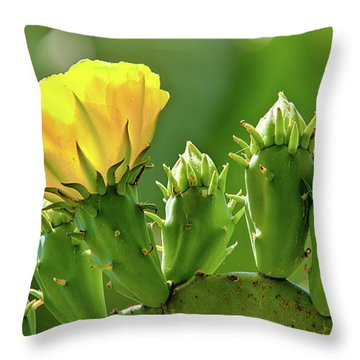 Throw Pillow featuring the photograph Cactus Flower On A Cactus Plant by Dan Carmichael