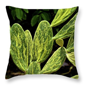 Throw Pillow featuring the photograph Cactus Patterns by Richard Goldman