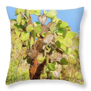 Cactus Trees In Galapagos Islands Throw Pillow by Marek Poplawski