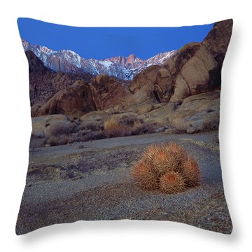 Cactus With A View Throw Pillow