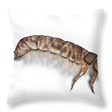 Caddisfly Larva Nymph Psychomiidae Hydropsyche Pellucidula -  Throw Pillow