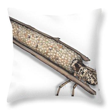 Caddisfly Limnephilidae Anabolia Nervosea Larva Nymph -  Throw Pillow
