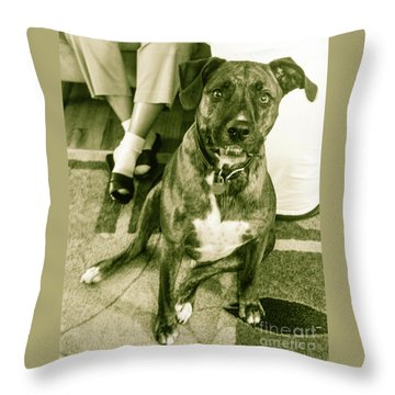 Caeser 6 Throw Pillow by Robin Coaker