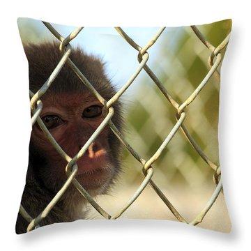 Caged Monkey Throw Pillow