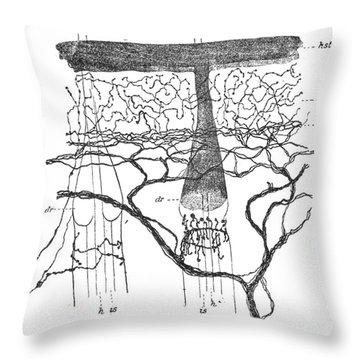 Cajal Illustration Rat Nerve Endings Throw Pillow