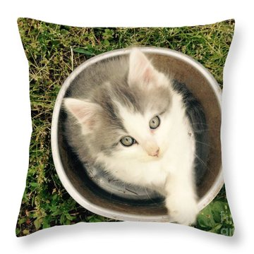 Cake Throw Pillow by Mary Tron