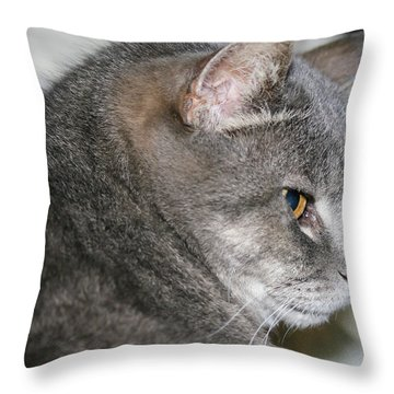 Cal-6 Throw Pillow