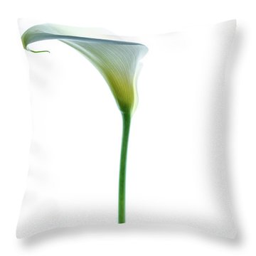 Cala Single Color Throw Pillow by Rebecca Cozart
