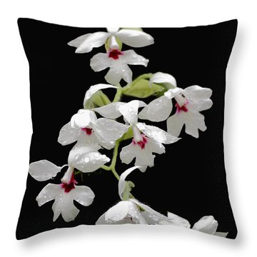 Calanthe Vestita Orchid Throw Pillow