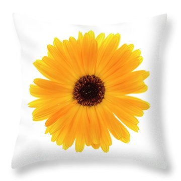 Throw Pillow featuring the photograph Calendula Flower by Elena Elisseeva