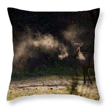 Throw Pillow featuring the photograph Calf Elk In December by Michael Dougherty