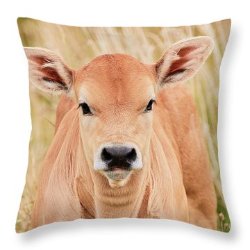 Throw Pillow featuring the photograph Calf In The High Grass by Nick Biemans