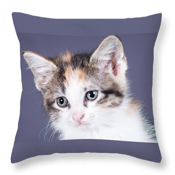 Calico Closeup Throw Pillow by Lawrence Burry