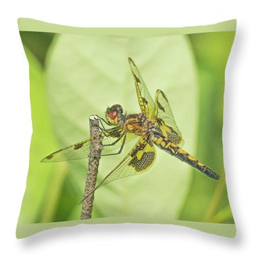 Calico Pennant Throw Pillow