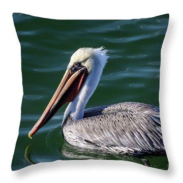 California Brown Pelican In Late Summer Throw Pillow