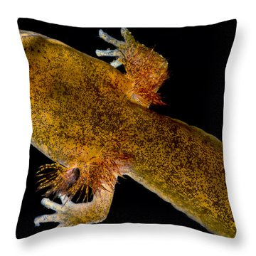 California Giant Salamander Larva Throw Pillow by Dant� Fenolio