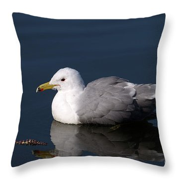 Throw Pillow featuring the photograph California Gull by Sharon Talson