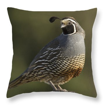 California Quail Male Santa Cruz Throw Pillow by Sebastian Kennerknecht