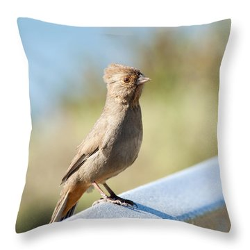 California Towhee ? Throw Pillow by Daniel Hebard