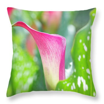 Throw Pillow featuring the photograph Calla Lily Abstract by Tim Gainey